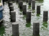 Recycled Mixed Plastic Piles | Support Posts  200mm dia